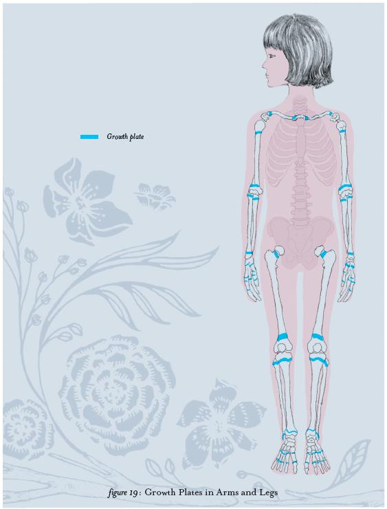 Anatomy For Kids, Growth Plates, Figure