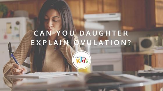 anatomy for kids, ovulation