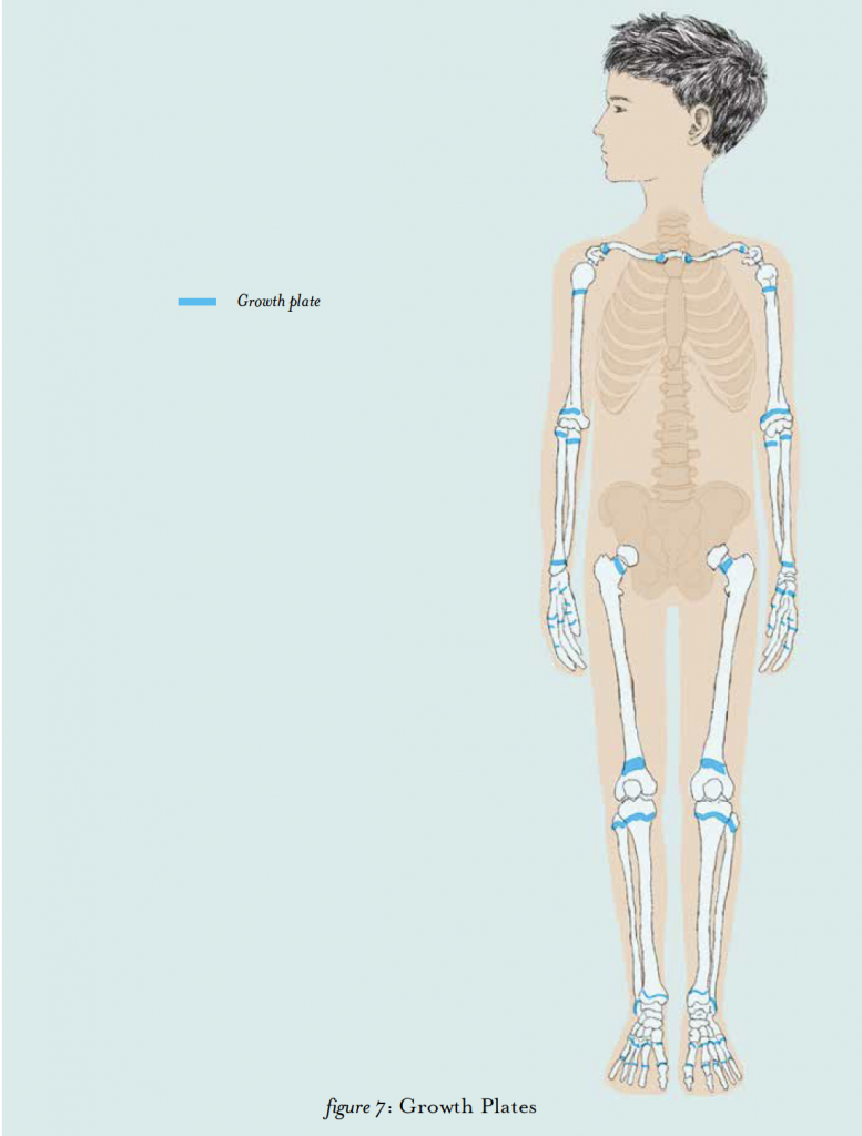 anatomy for kids, growing, growth plates, puberty in boys