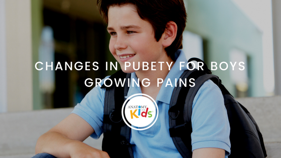 anatomy for kids, changes in puberty, puberty for boys, growing