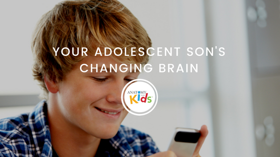 Adolescent son, changing brain, anatomy for kids